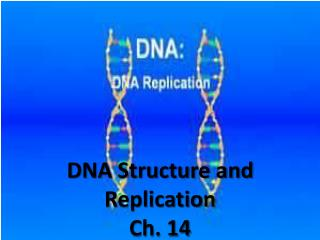 DNA Structure and Replication Ch. 14