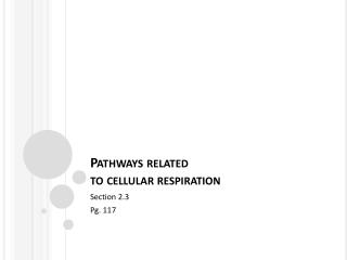 Pathways related  to cellular respiration