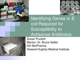 Identifying Genes in  E. coli  Required for  Susceptibility to Antisense Antibiotics