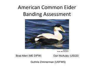 American Common Eider Banding Assessment