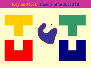 Key and lock ;  theory of induced fit