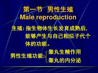 第一节  男性生殖 Male reproduction