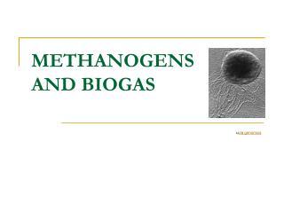 METHANOGENS AND BIOGAS