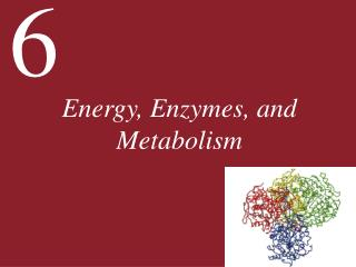 Energy, Enzymes, and Metabolism
