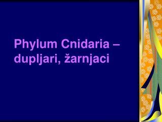 Phylum Cnidaria –  dupljari, ž arnjaci