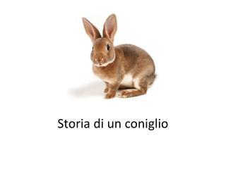 Storia di  un  coniglio