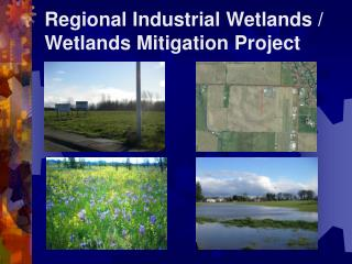 Regional Industrial Wetlands / Wetlands Mitigation Project