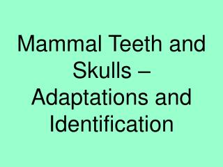 Mammal Teeth and Skulls – Adaptations and Identification