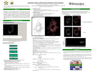 Quantitative Analysis of Mitochondrial Tubulation Using 3D Imaging
