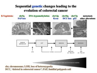 Sequential  genetic  changes leading to the  evolution of colorectal cancer