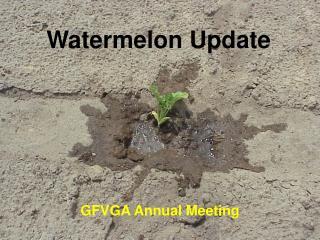 Watermelon Update
