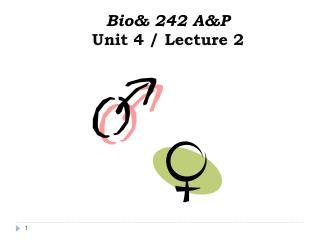 Bio& 242 A&P  Unit 4 / Lecture 2