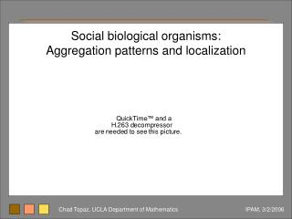Social biological organisms: Aggregation patterns and localization
