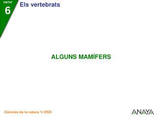 ELS MONOTREMES