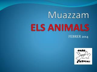 M uazzam ELS  ANIMALS