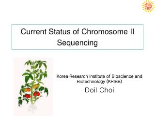 Current Status of Chromosome II Sequencing