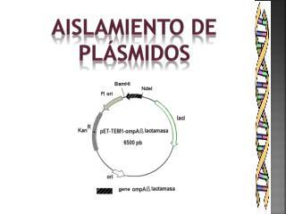 AISLAMIENTO DE PLÁSMIDOS