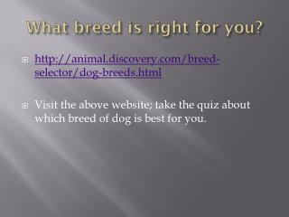 What breed is right for you?