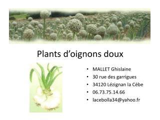 Plants d'oignons doux