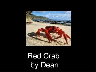 Red Crab  by Dean