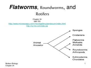 Flatworms ,  Roundworms , and  Rotifers