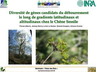 Séminaire «Thèse des Bois» Cap Sciences Bordeaux 30-01-09