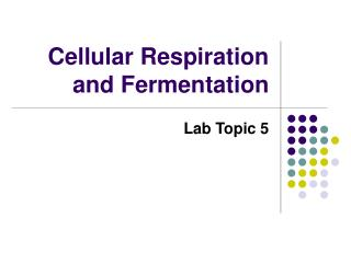 Cellular Respiration and Fermentation