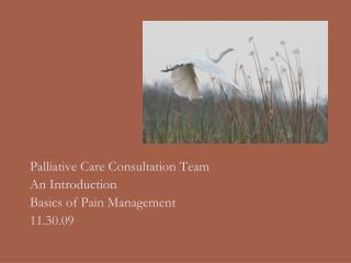 Palliative Care Consultation Team An Introduction Basics of Pain Management 11.30.09