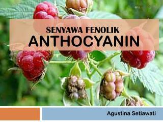 ANTHOCYANIN