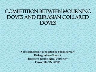 Competition between mourning Doves and Eurasian collared doves