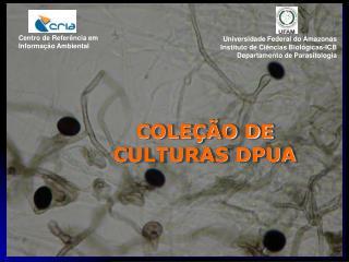 COLE��O DE CULTURAS DPUA