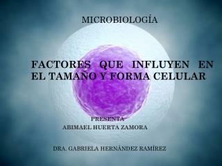 FACTORES QUE INFLUYEN EN EL TAMA�O Y FORMA CELULAR