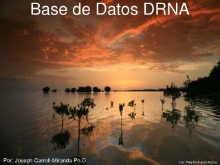 Base de Datos DRNA