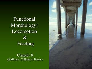 Functional  Morphology:  Locomotion  &  Feeding Chapter 8 (Helfman, Collette & Facey)