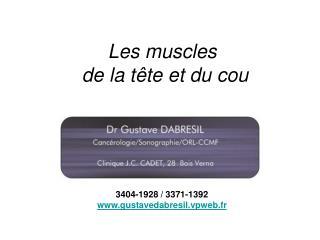 Les muscles  de la tête et du cou