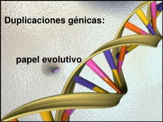 Duplicaciones génicas:  papel evolutivo