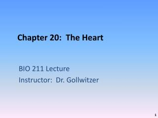 Chapter 20:  The Heart