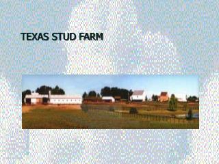 TEXAS STUD FARM
