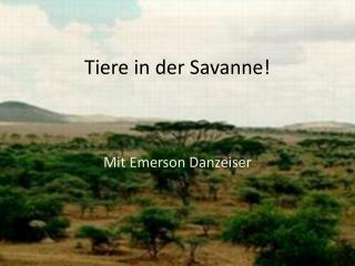 Tiere  in  der Savanne !