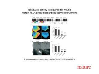 P Niethammer  et al. Nature 000 , 1-4 (2009) doi:10.1038/nature08119