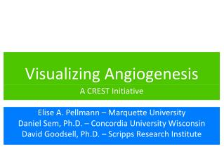 Visualizing Angiogenesis