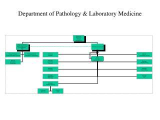Department of Pathology & Laboratory Medicine