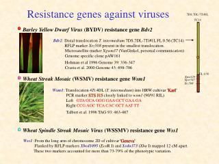 Resistance genes against viruses