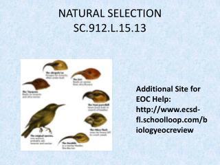 NATURAL SELECTION SC.912.L.15.13