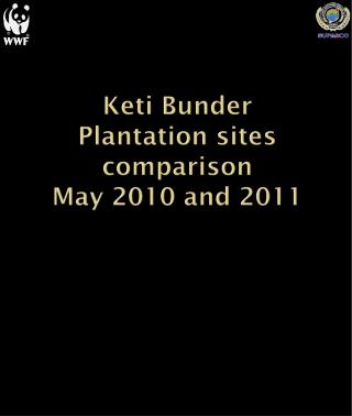 Keti Bunder Plantation sites comparison  May 2010 and 2011