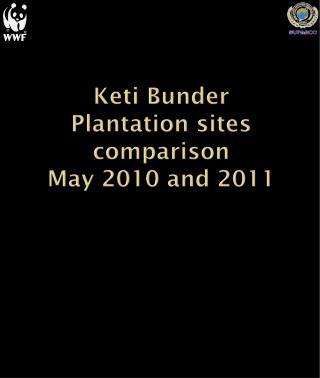 Keti Bunder Plantation sites comparison  May 2010 and 2011
