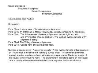 Class: Crustacea Subclass: Copepoda                                       Order: Eucopepoda