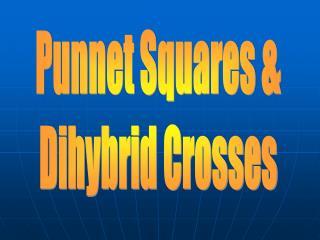 Punnet Squares & Dihybrid Crosses