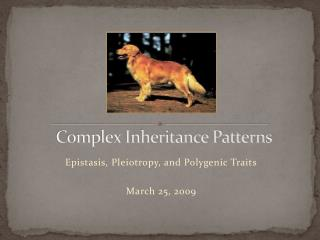 Complex Inheritance Patterns