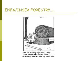 ENFA/INSEA FORESTRY…..